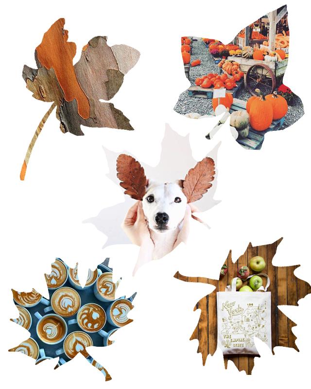 2016-Fall-Blog-Post-Pinterest